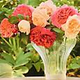 ポールースミザーさんの薔薇の写真